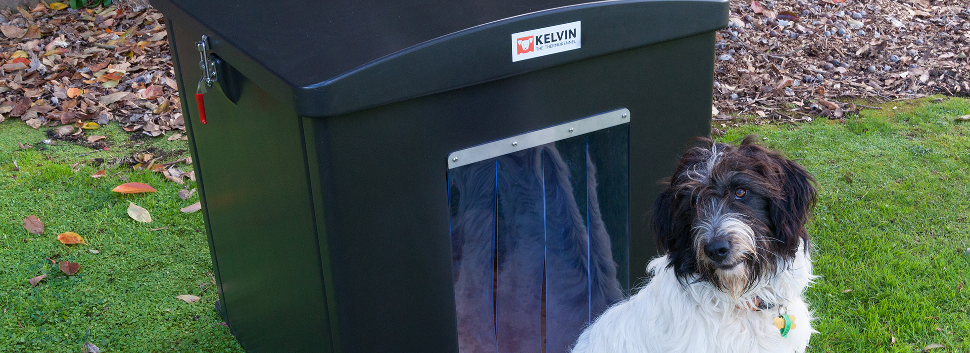 Kelvin the Thermokennel